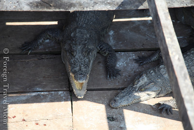 Later we found a small crocodile farm, right there in the store by the boat dock
